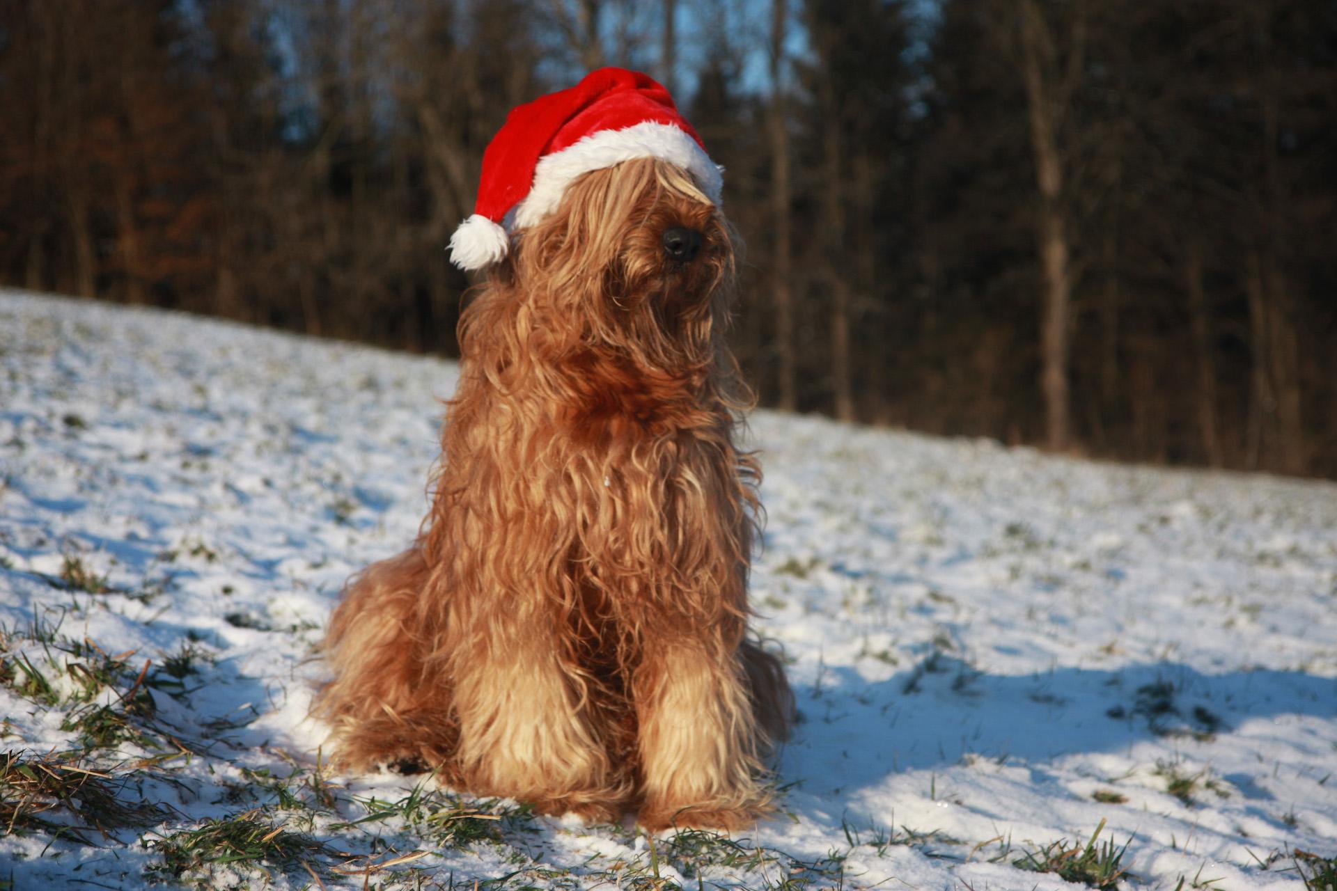 Wir wünschen allen Frohe Weihnachten!