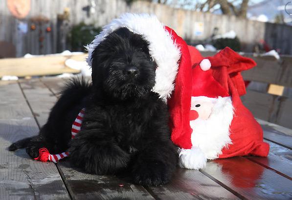 Weihnachten 2009 – bei uns Zu Hause