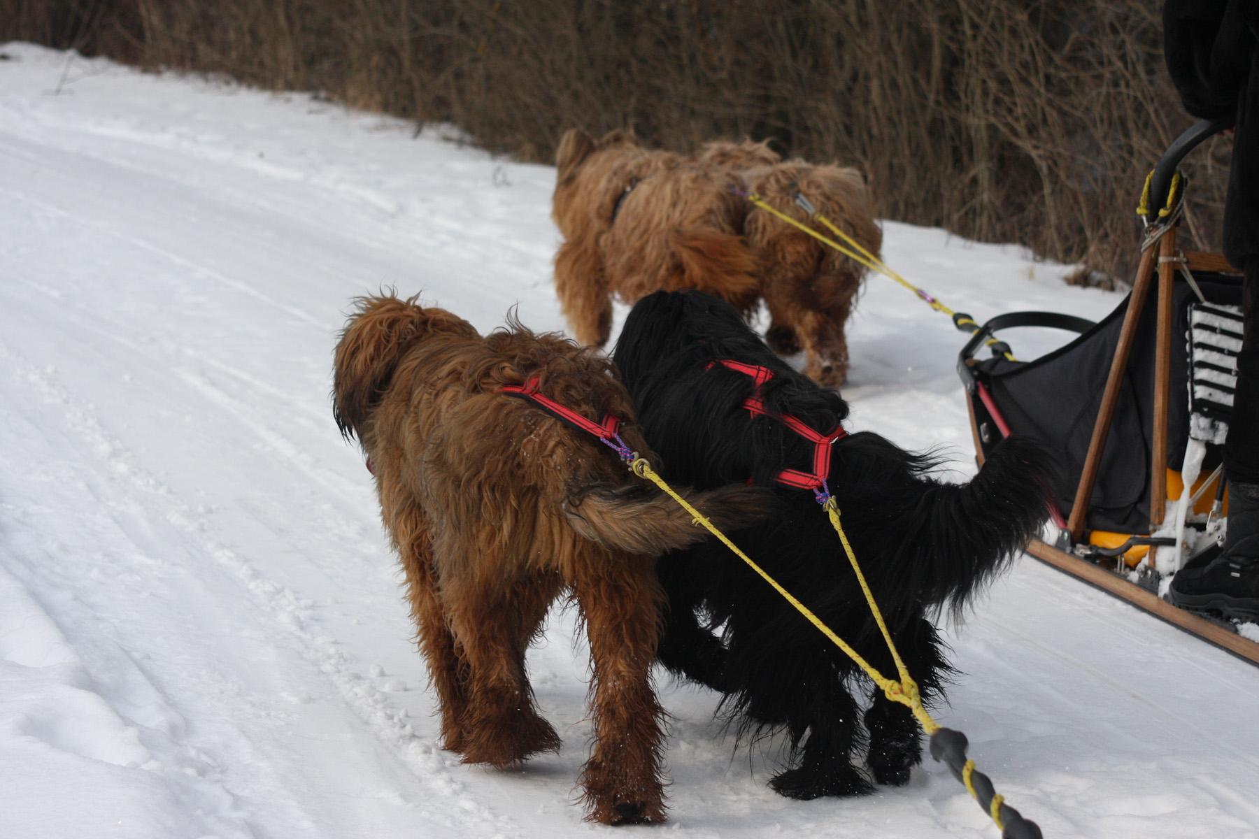 Hundeschlittenkurse