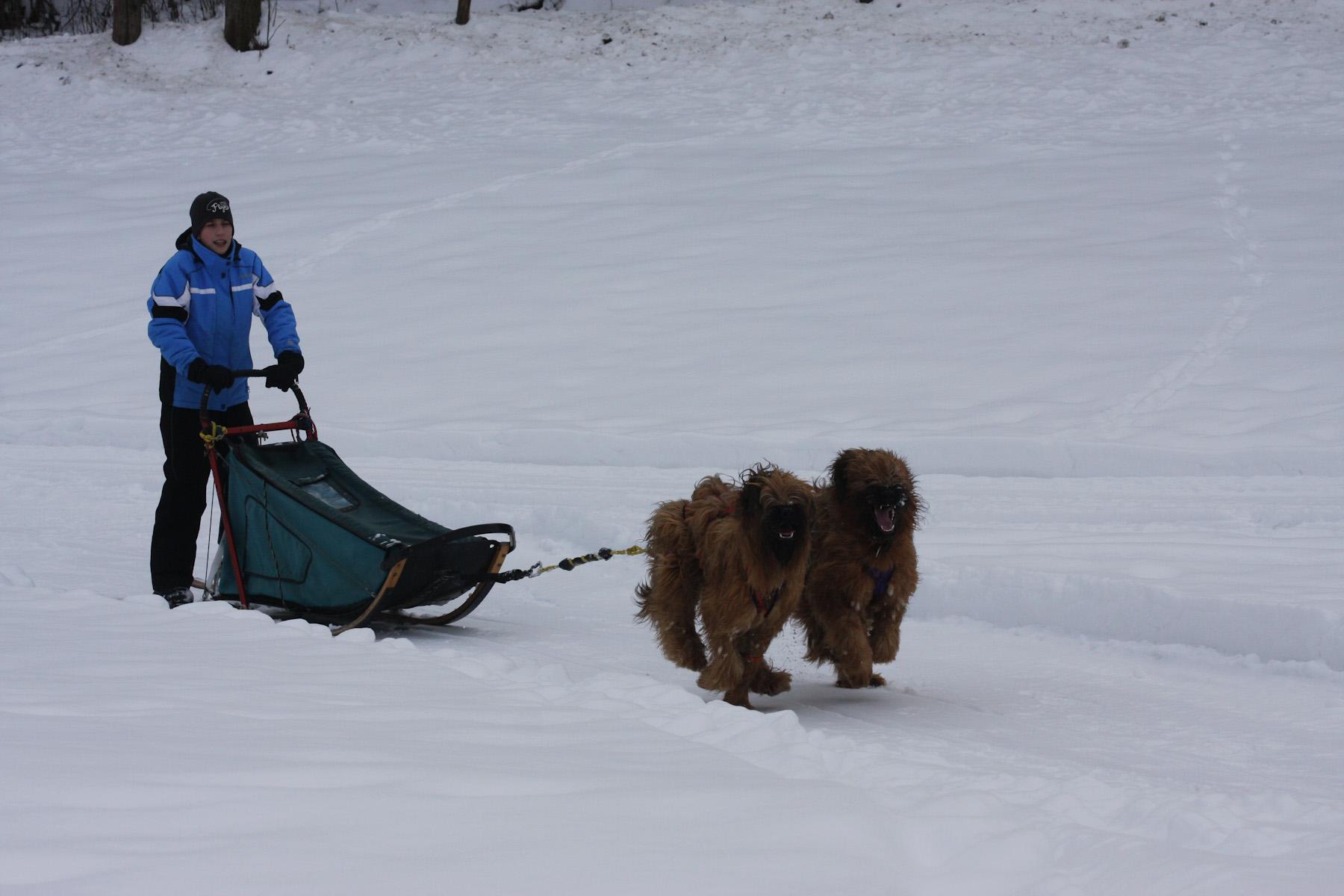 Hundeschlittenkurse Februar