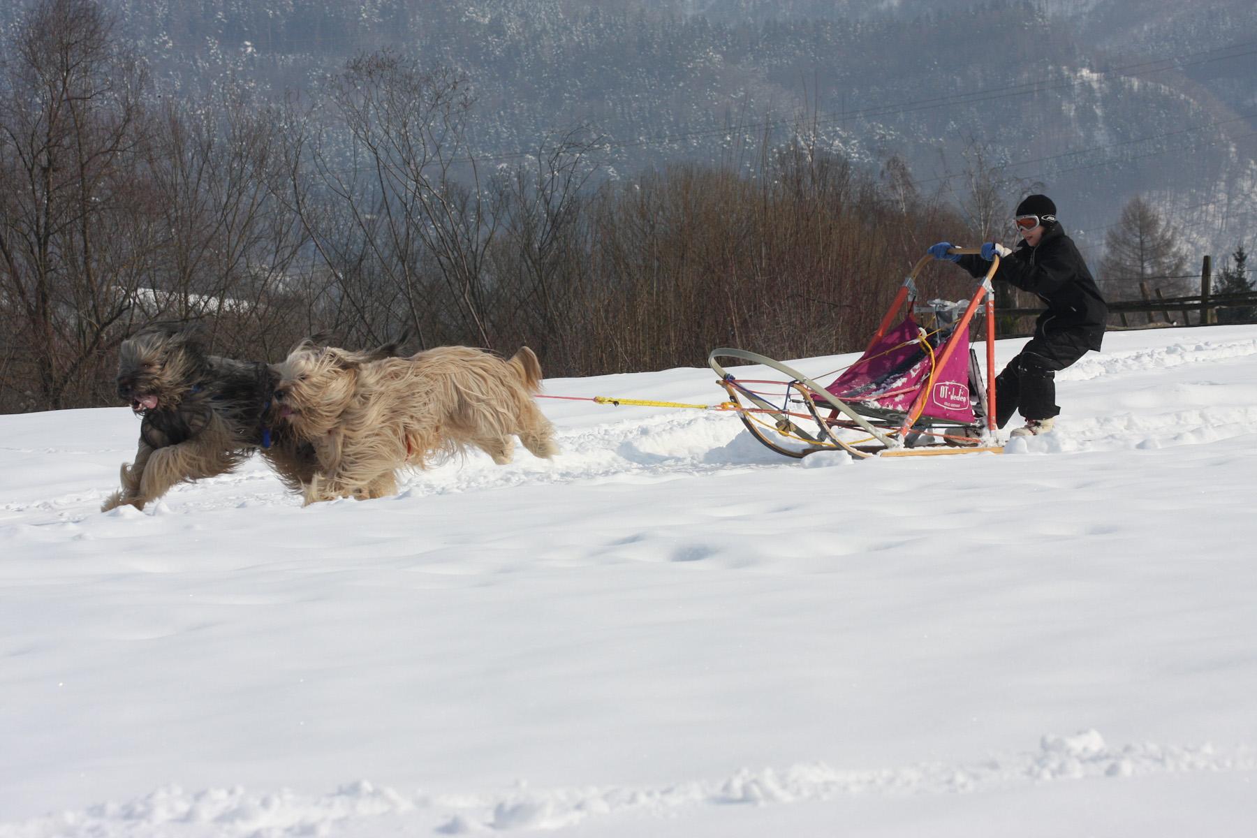Hundeschlitten Training Profis – Februar