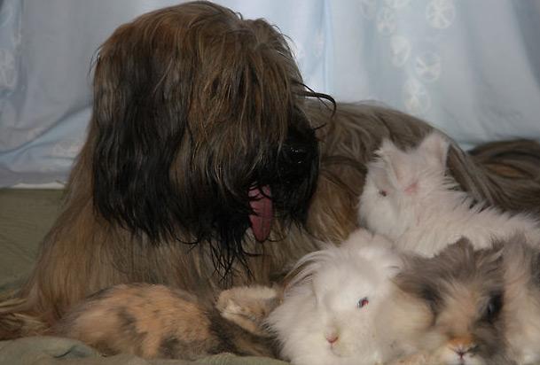 Cheveyo und die Osterhasen wünschen allen frohe Ostern!