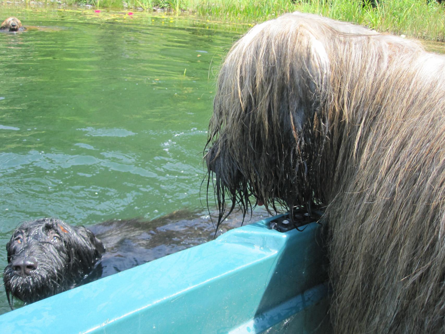 Videos von unseren Bärlis beim Schwimmen