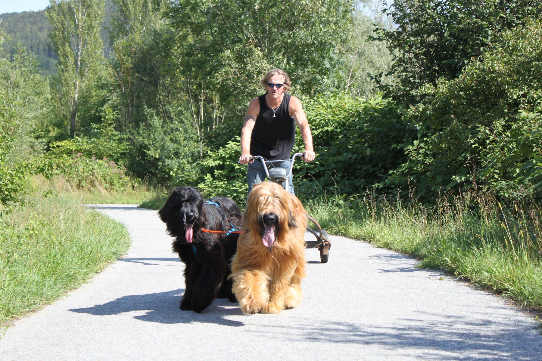 Hundewagen fahren mit Teddy und Lenny