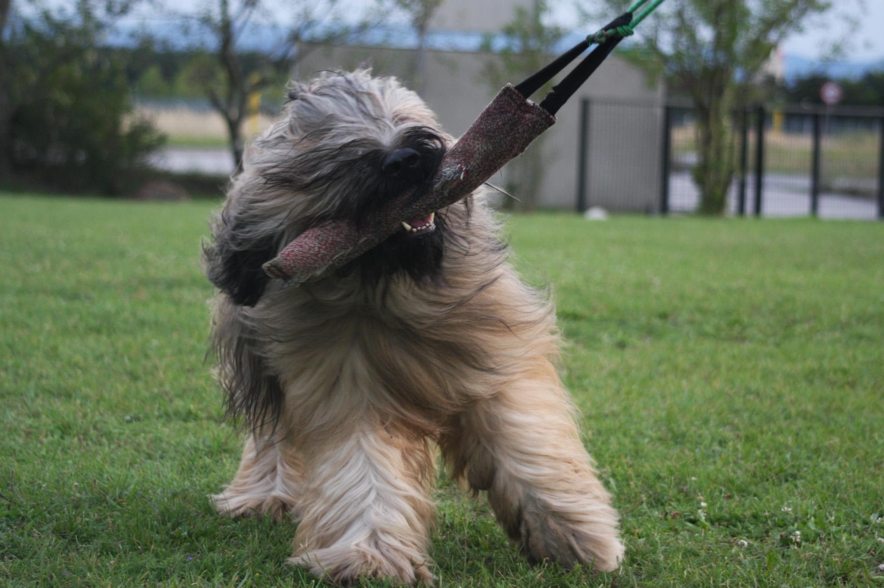 Schutzhunde Training