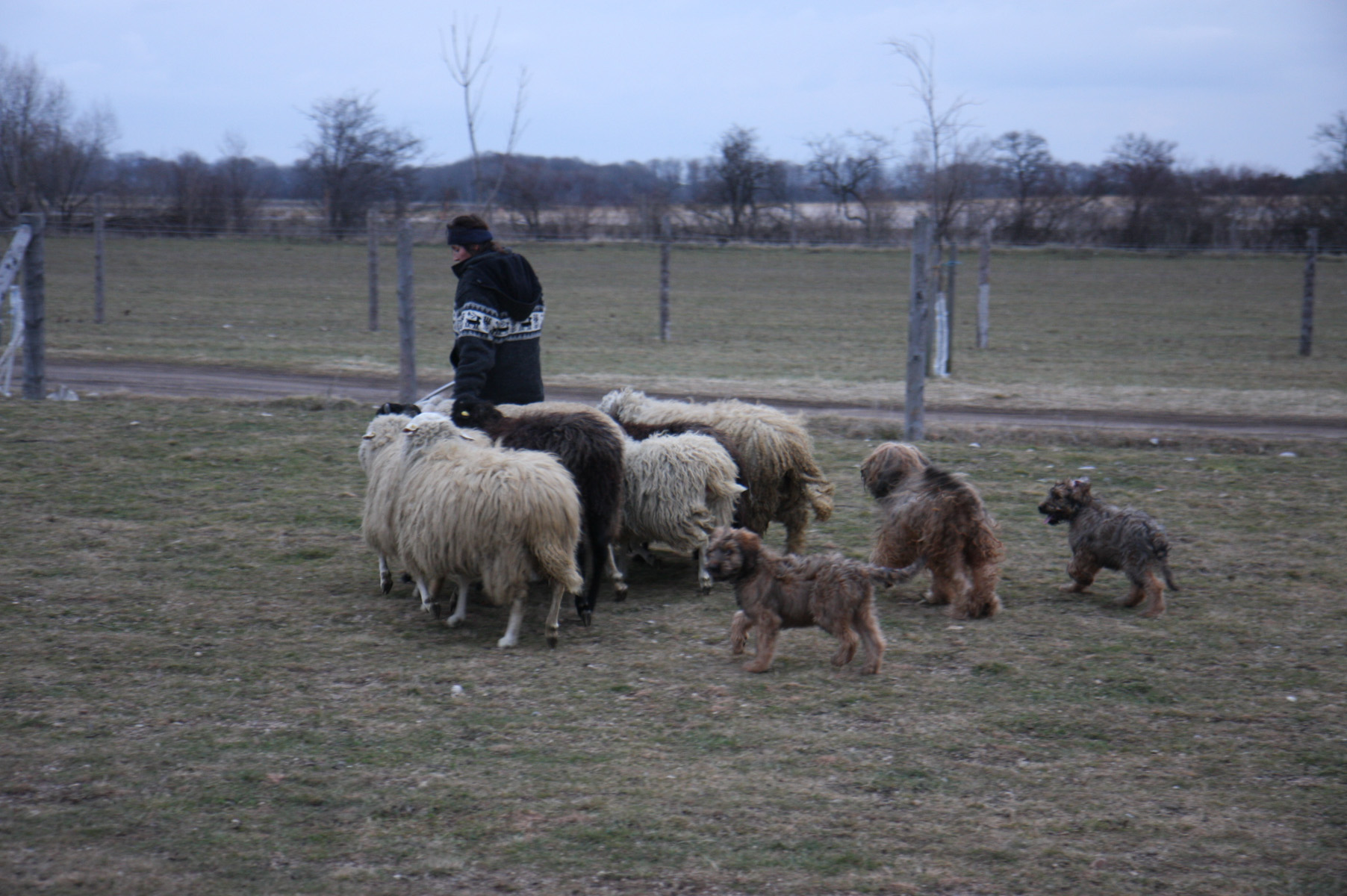 Gui-k´ate und Gwyenth waren Schafe hüten