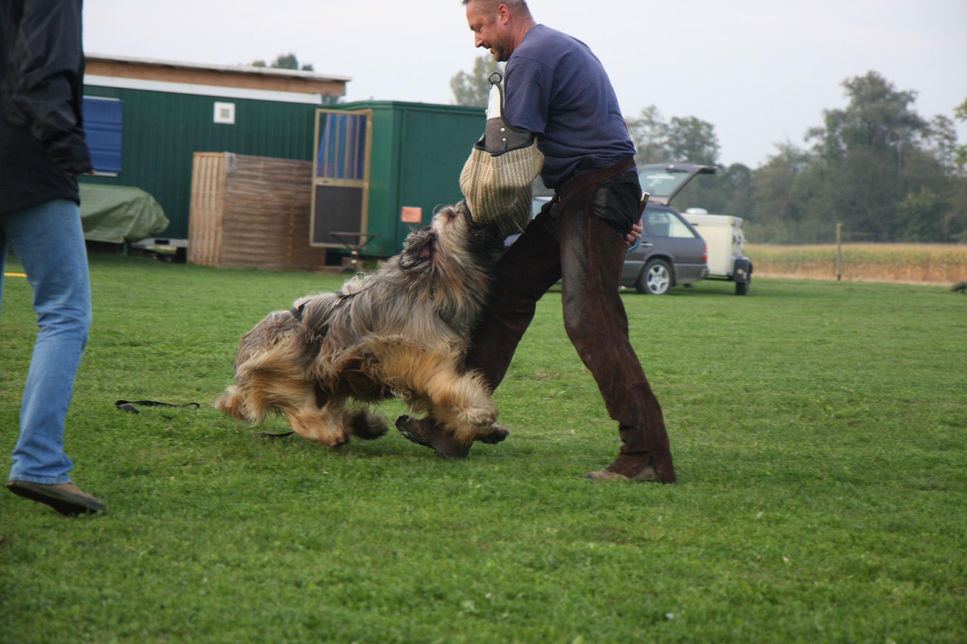 Schutzhundetraining