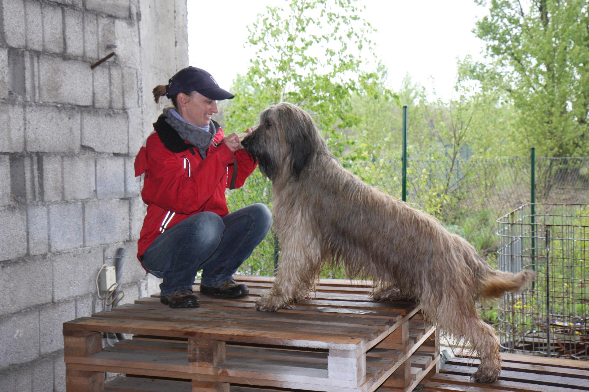 33 DMDS Bären beim Schutzhunde Event mit Markus Mohr