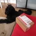 Unser Trick Dog Star ELLIOT!  Elliot kann jetzt auch Becher stappeln – seht selbst auf Elliots HP http://elliotdmds.blogspot.com/