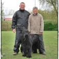 Philou mit Caly und World Champion 2009of Obedience Master Carmen Bennett   Caly beim Training