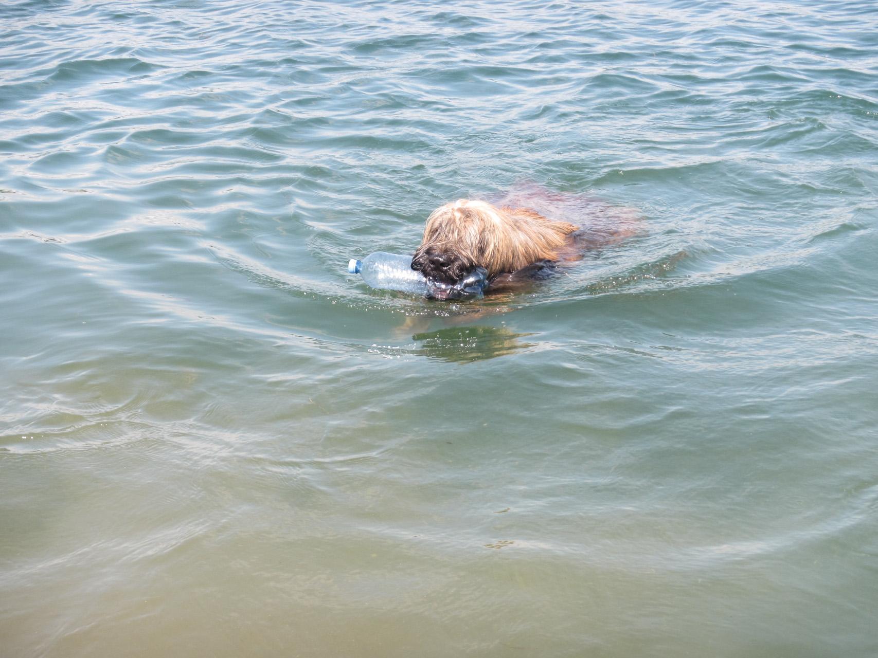 Cheveyo beim Schwimmen