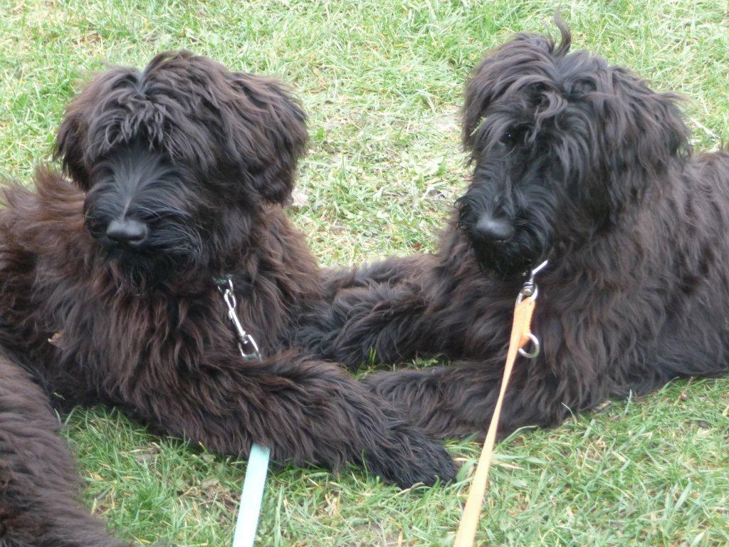"""Josi und Kira haben die Junghundeveranlagungs Prüfung """"vielversprechend"""" gemeistert!"""