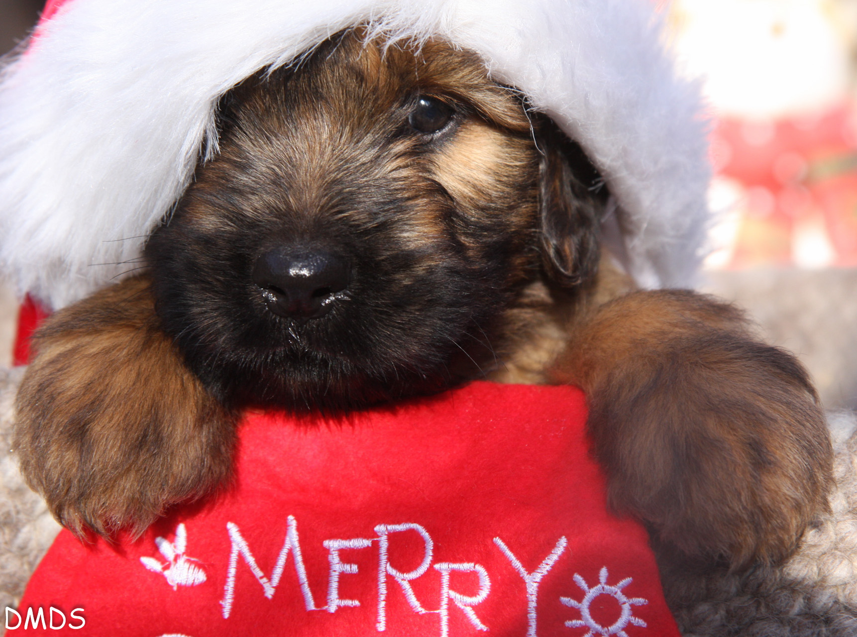 Unsere L2 Bärlis wünschen frohe Weihnachten!