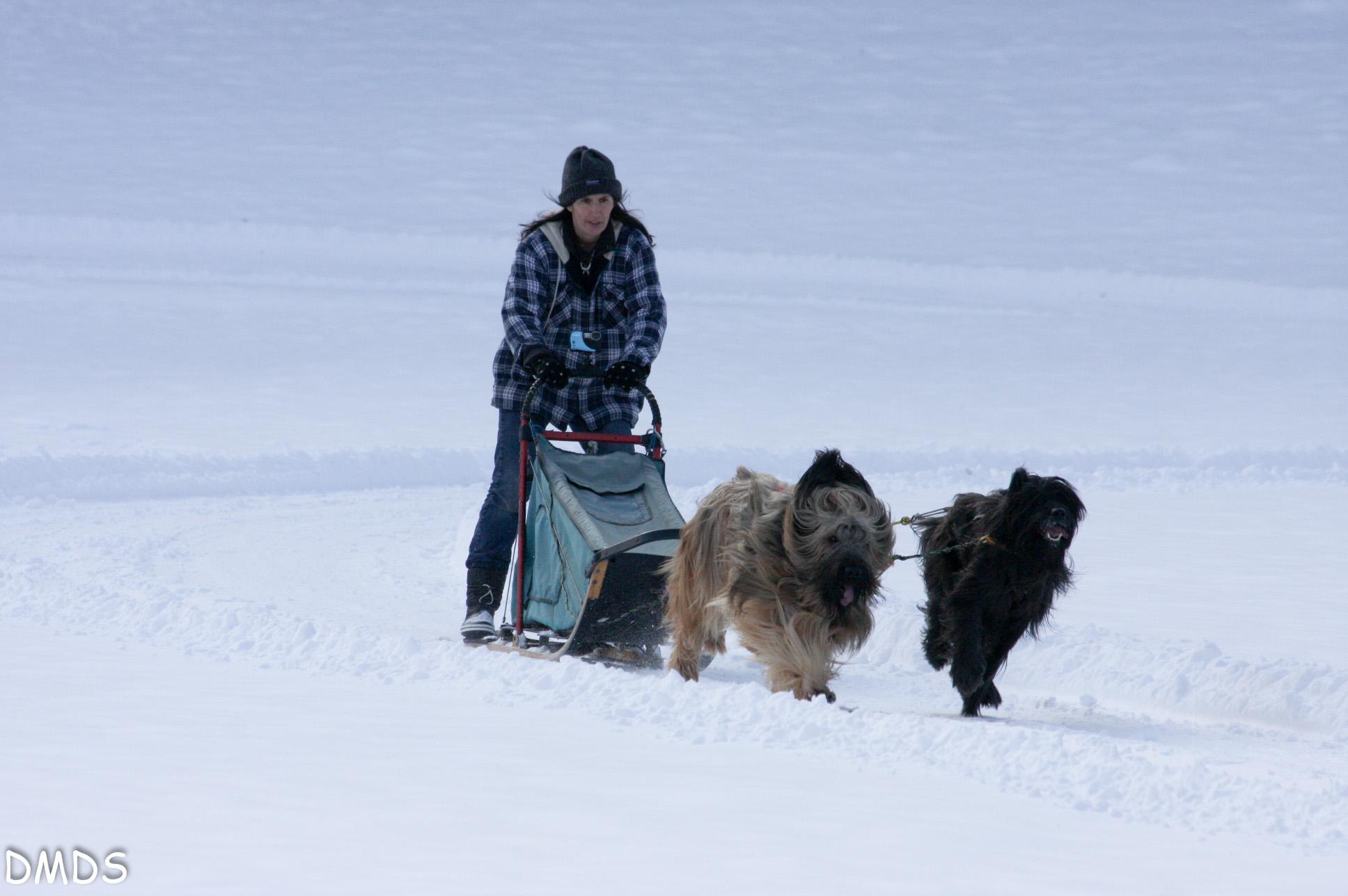 DMDS Wheel dogs und Lead dogs