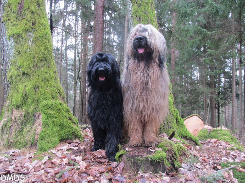 Im Bärenwald