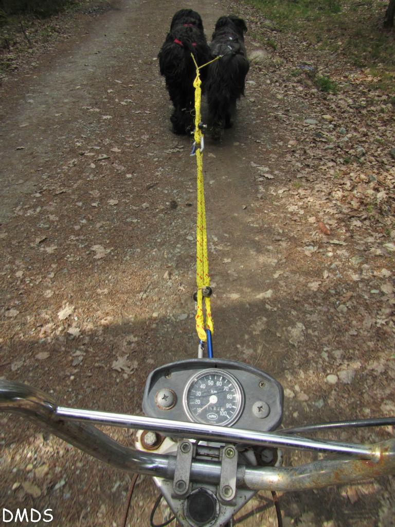 Hundewagen fahren am Bärenwald Trail