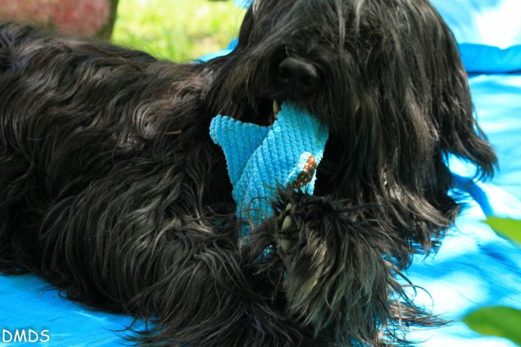 Dog Show Napanee