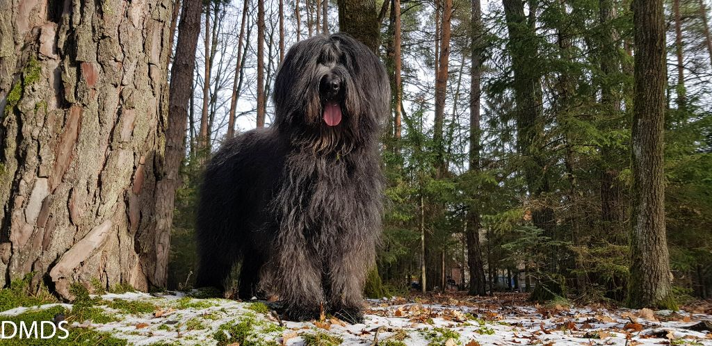 Unsere Bärlis – Sel I Chiriguana Cháne avec la force del´ ours