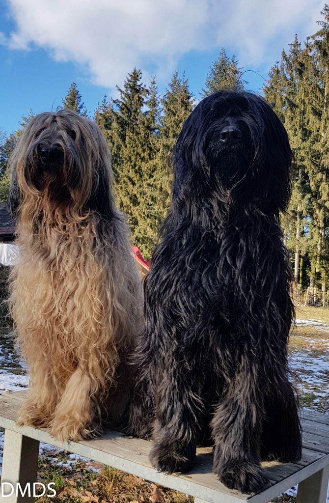 Jänner im Bärenwald