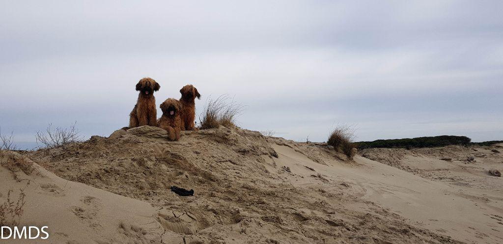 France 2019  – Teil 3 – der Strand den wir uns mit den Stieren teilten.