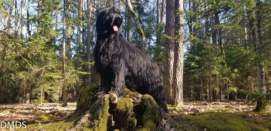 Februar im Bärenwald