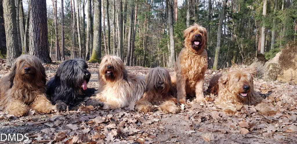 März im Bärenwald