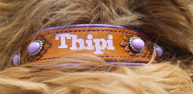 Thipis neues Halsband