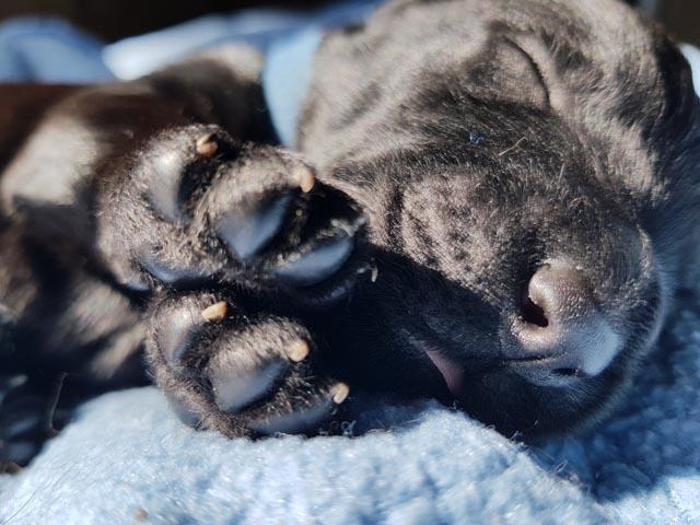 Unsere Babybären sind 1 Woche alt!