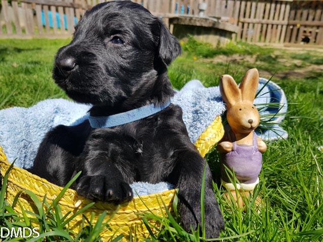 Unsere Babybären wünschen frohe Ostern!