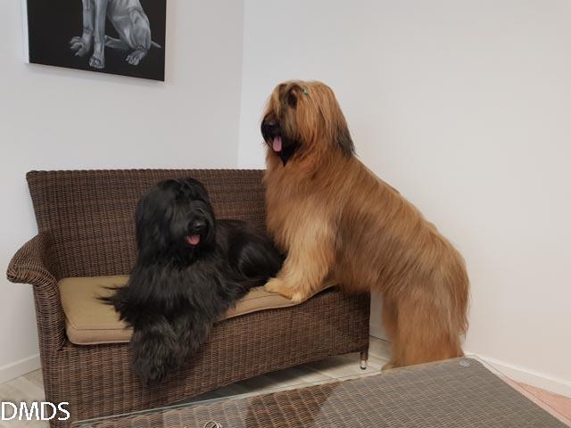 Nashashuk und Tonkawa – Beauty Models im Hunde Salon Klippdog