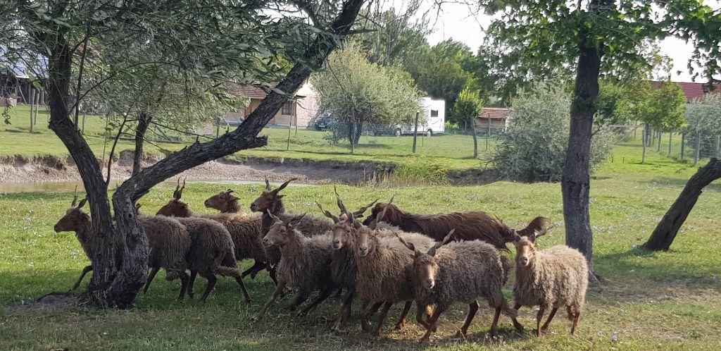 Bei Gabi in Ungarn