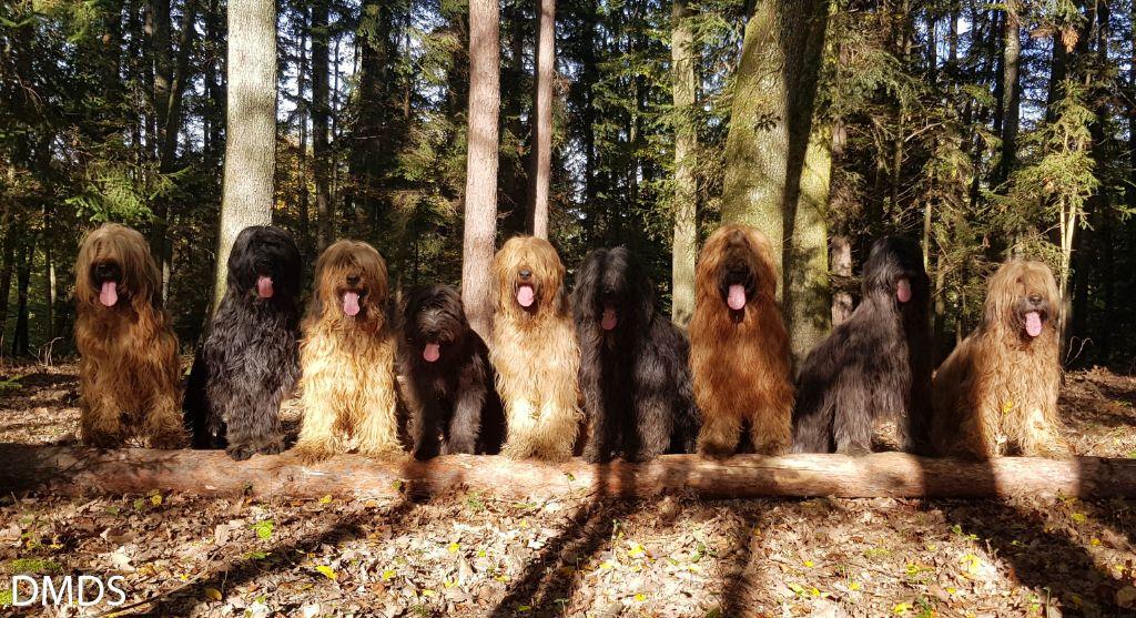 Der Bärenwald im Wald zu Hause