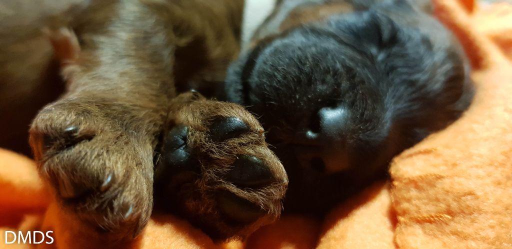 Unsere Putzibären – die Fotos von der ersten Woche