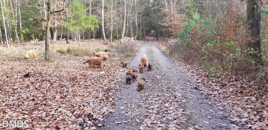 Waldausflug mit den Kleinen