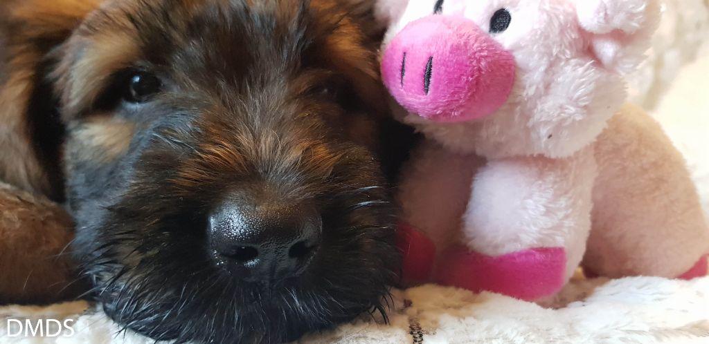 Erstes Sylvester für unsere 2 Putzibären
