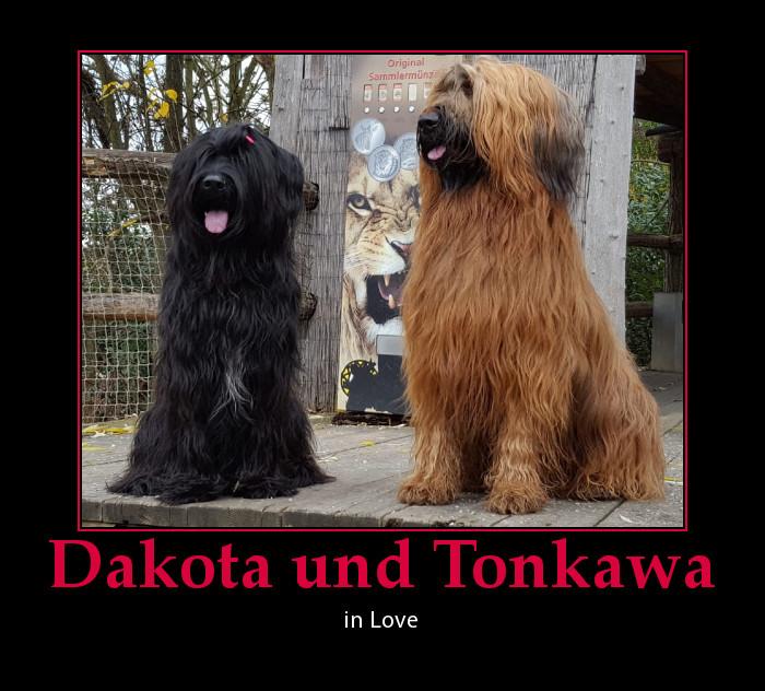 Tonkawa wird wieder Papa! Die schöne Dakota wird bald Nachwuchs haben!