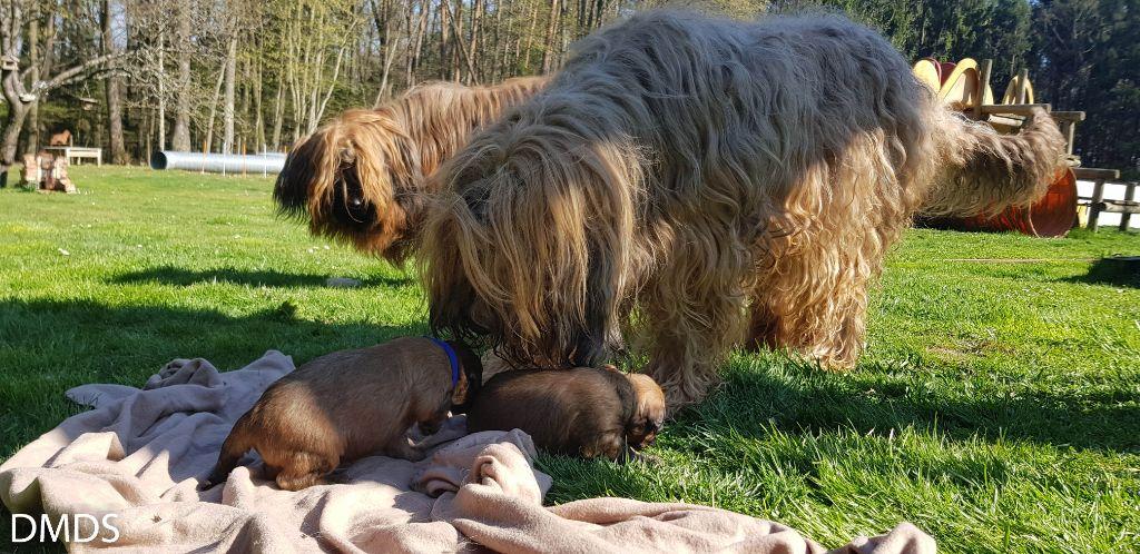 Gui k´ate und die Kleinen Z2 Babys