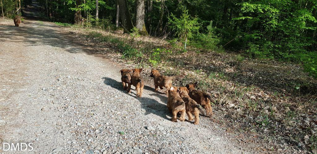 Mit den kleinen Bären durch den Bärenwald