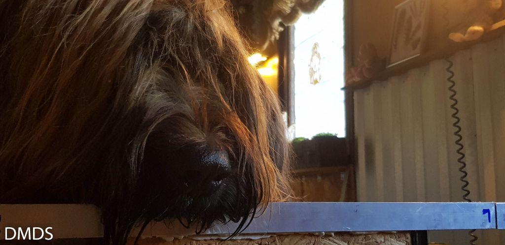 News von den Bärenwaldkindern und Mama und Papa