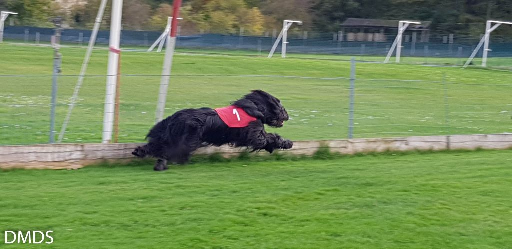 Briard Racing – Training