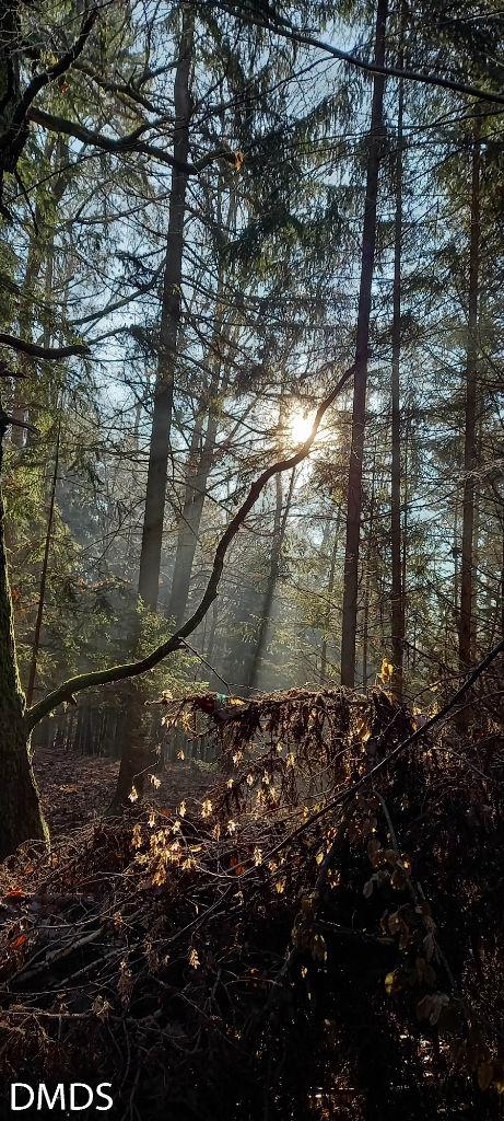 Wenn Märchen wahr werden – unser Zauberwald